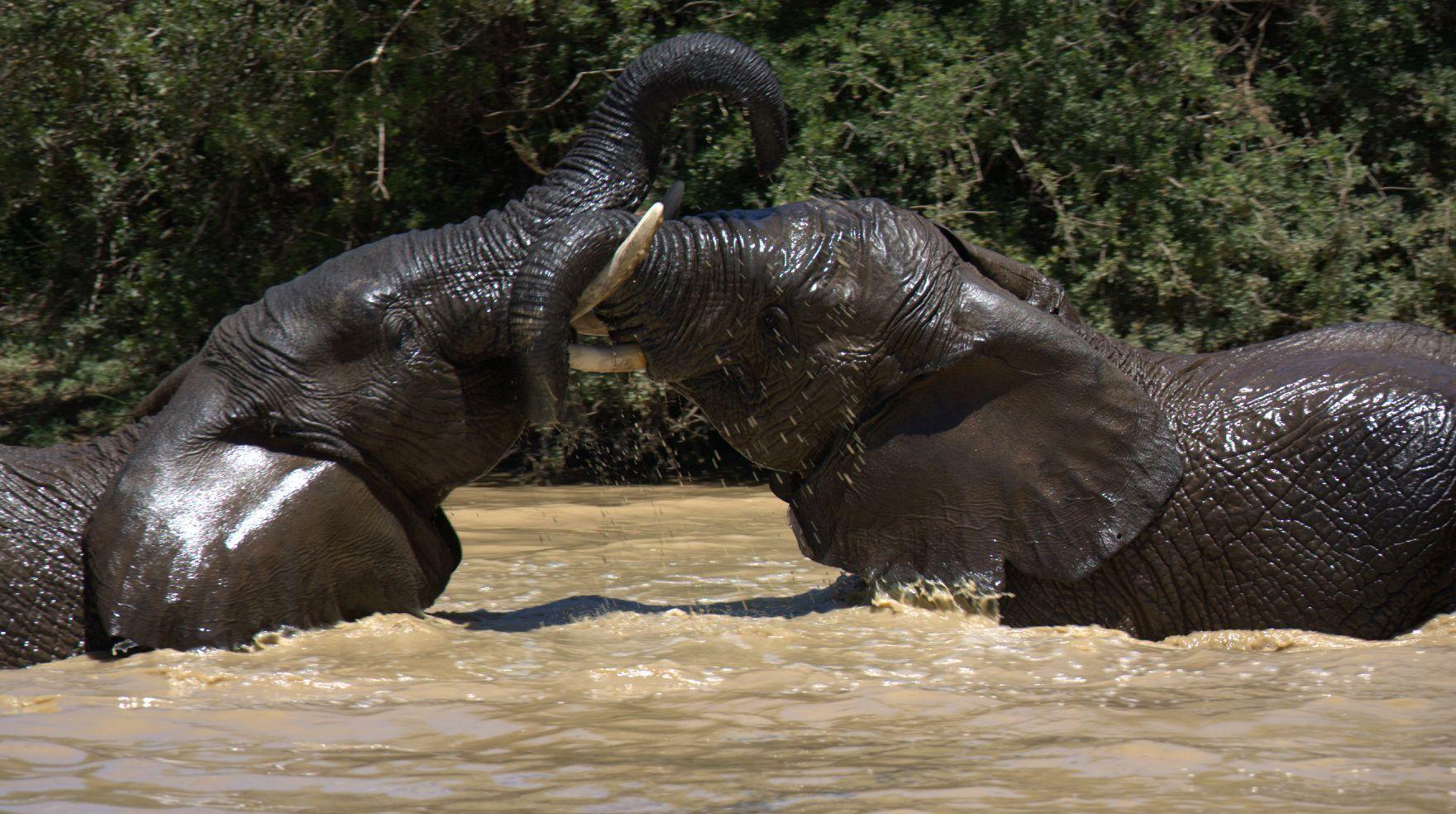 Two-Elelphants-safari